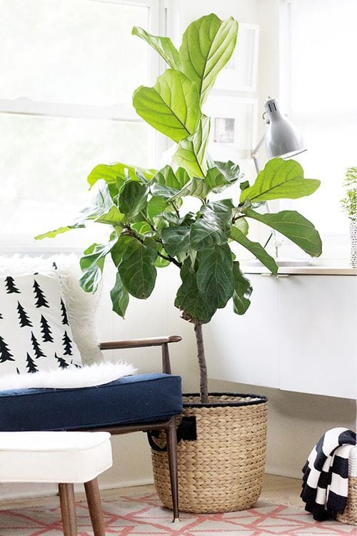 5-plants