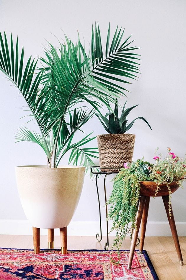 Decorating your room with some greenery