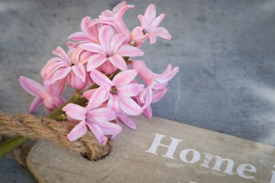 hyacinth home sign
